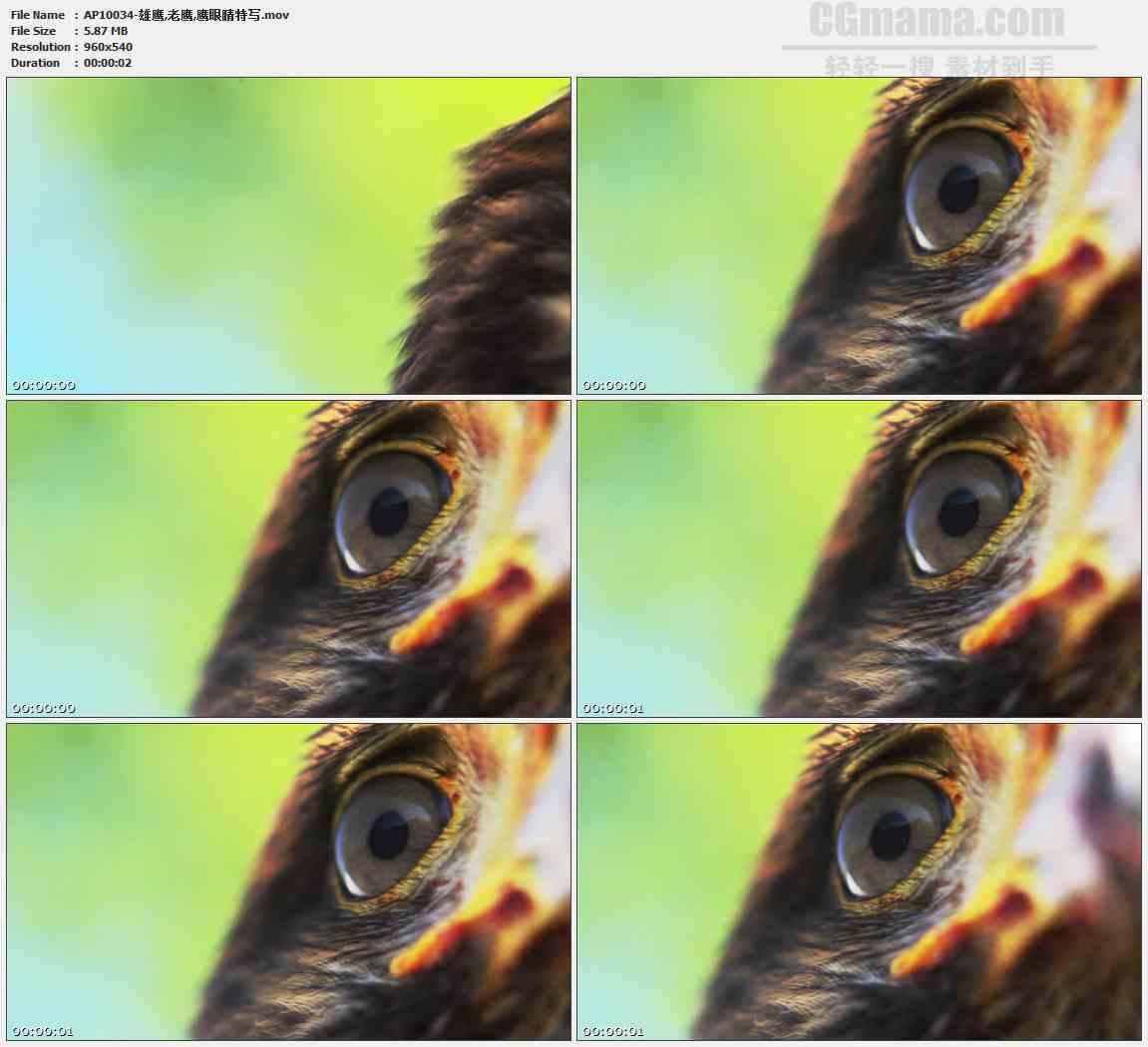 AP10034-老鹰鹰眼特写高清实拍视频素材