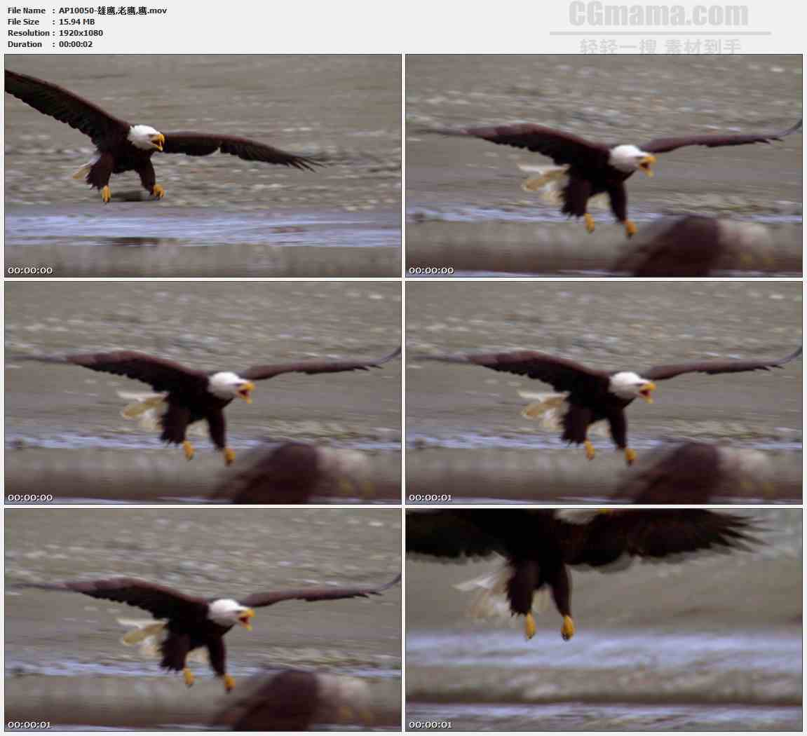 AP10050-雄鹰老鹰飞翔降落高清实拍视频素材