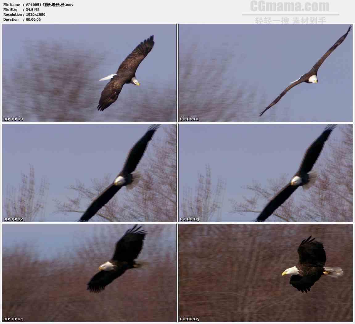 AP10051-雄鹰老鹰飞翔盘旋高清实拍视频素材