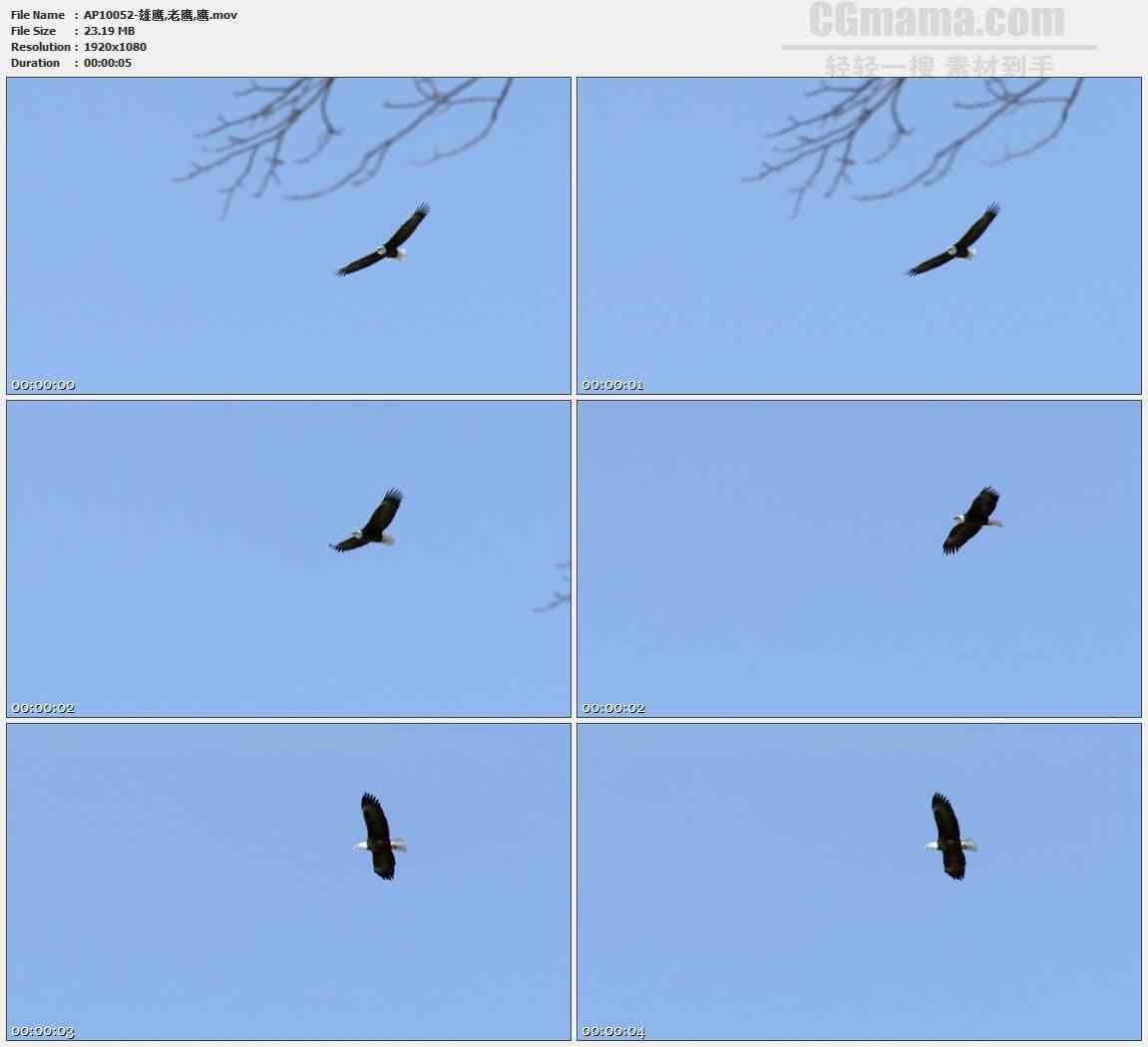 AP10052-雄鹰老鹰飞翔盘旋高清实拍视频素材
