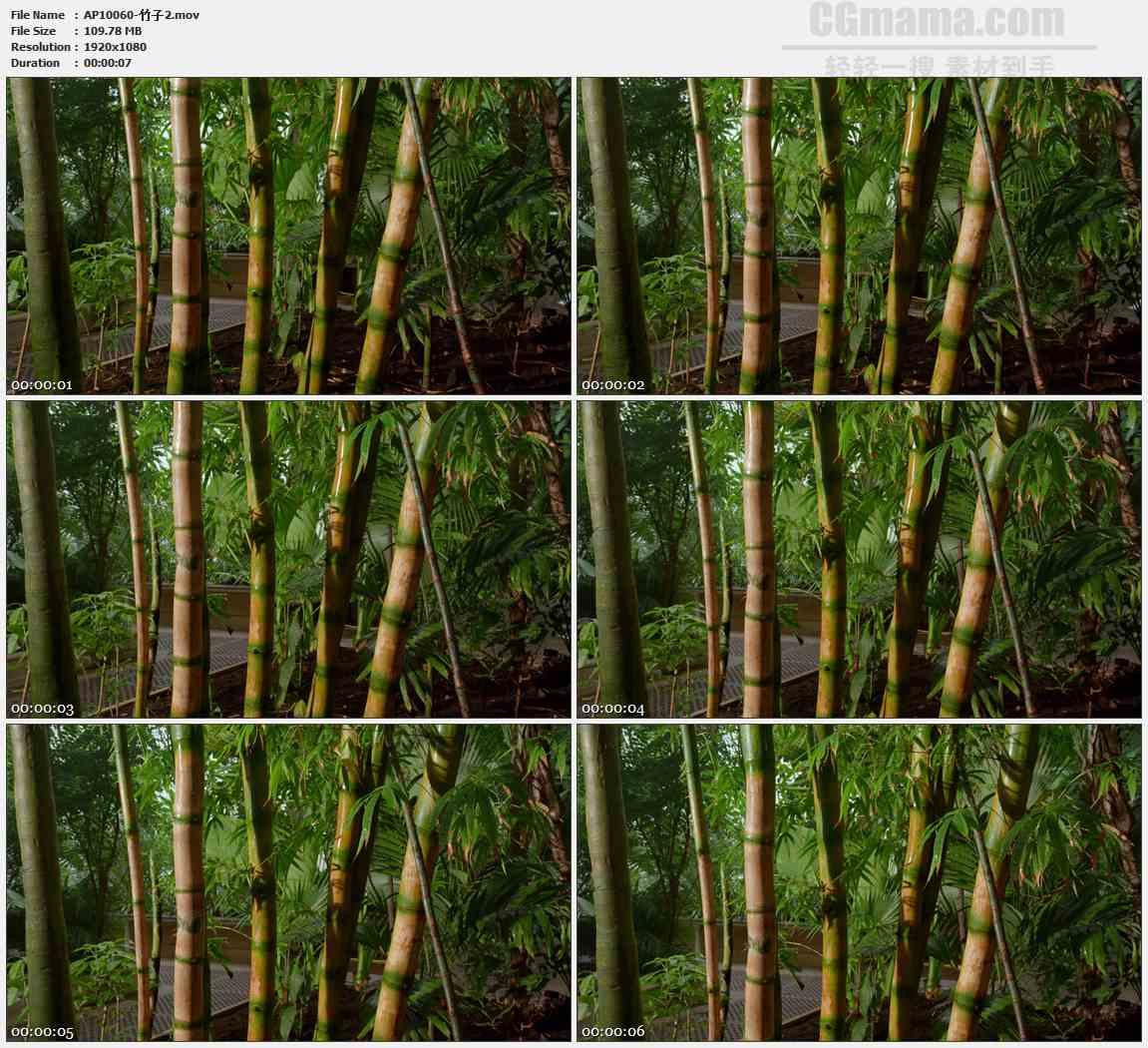 AP10060-竹林竹子竹节高清实拍视频素材