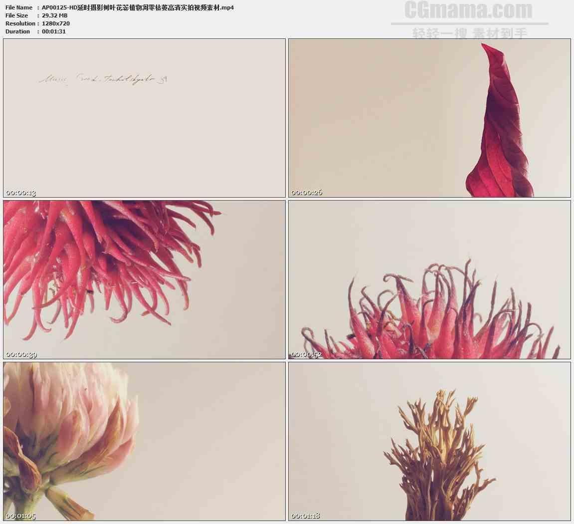 AP00125-各种树叶枫叶枯萎卷曲特写高清实拍视频素材