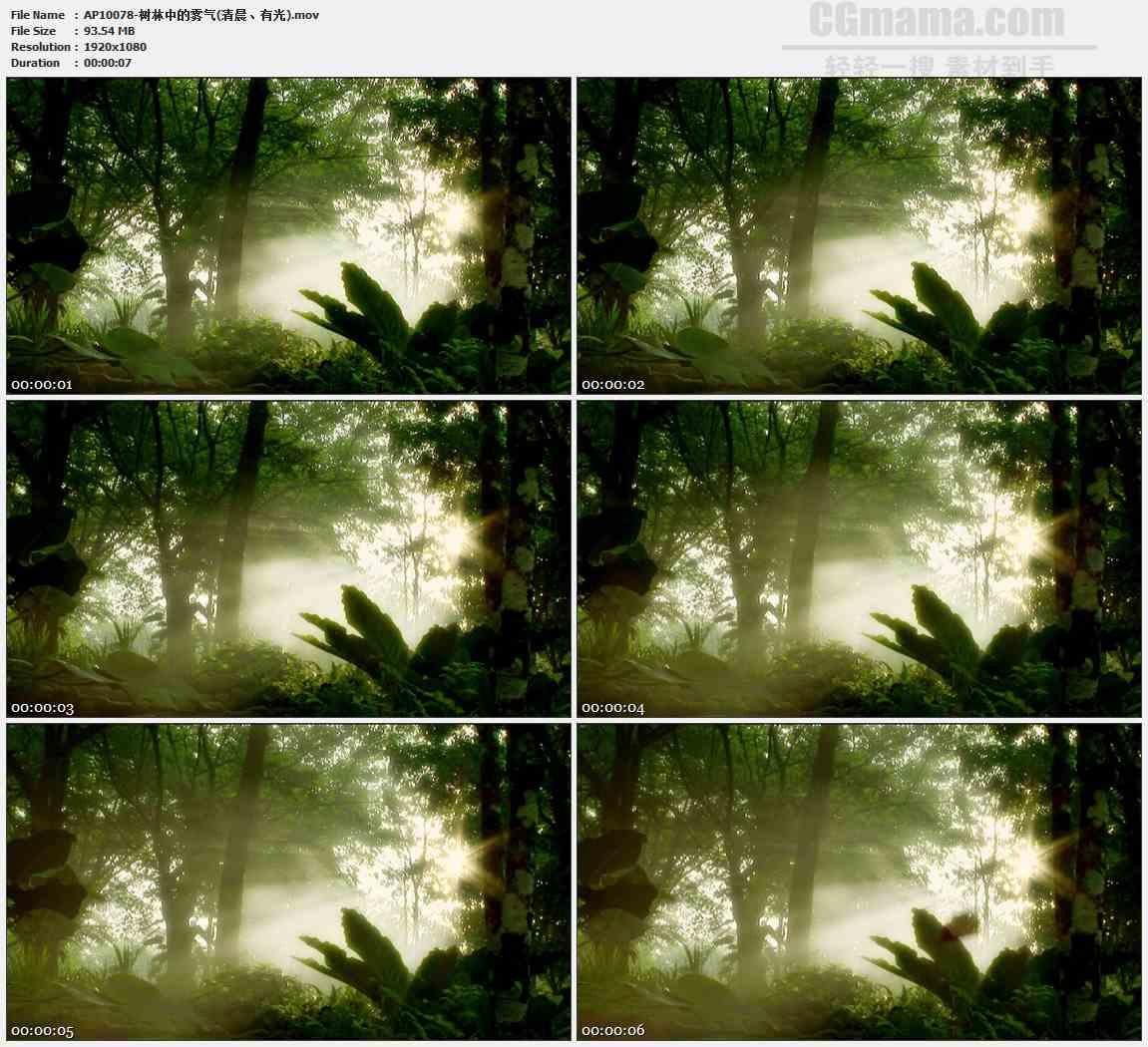 AP10078-热带雨林晨曦自然景观高清实拍视频素材