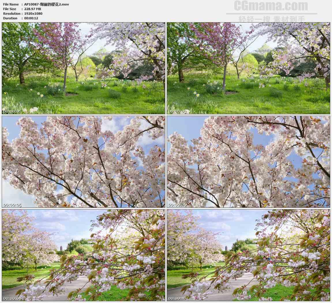 AP10087-樱花树樱花园特写高清实拍视频素材
