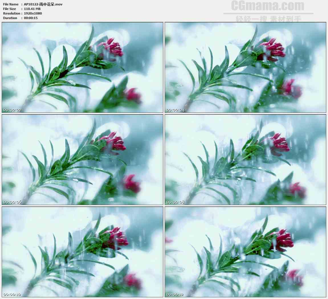 AP10122-雨水拍打花朵高清实拍视频素材