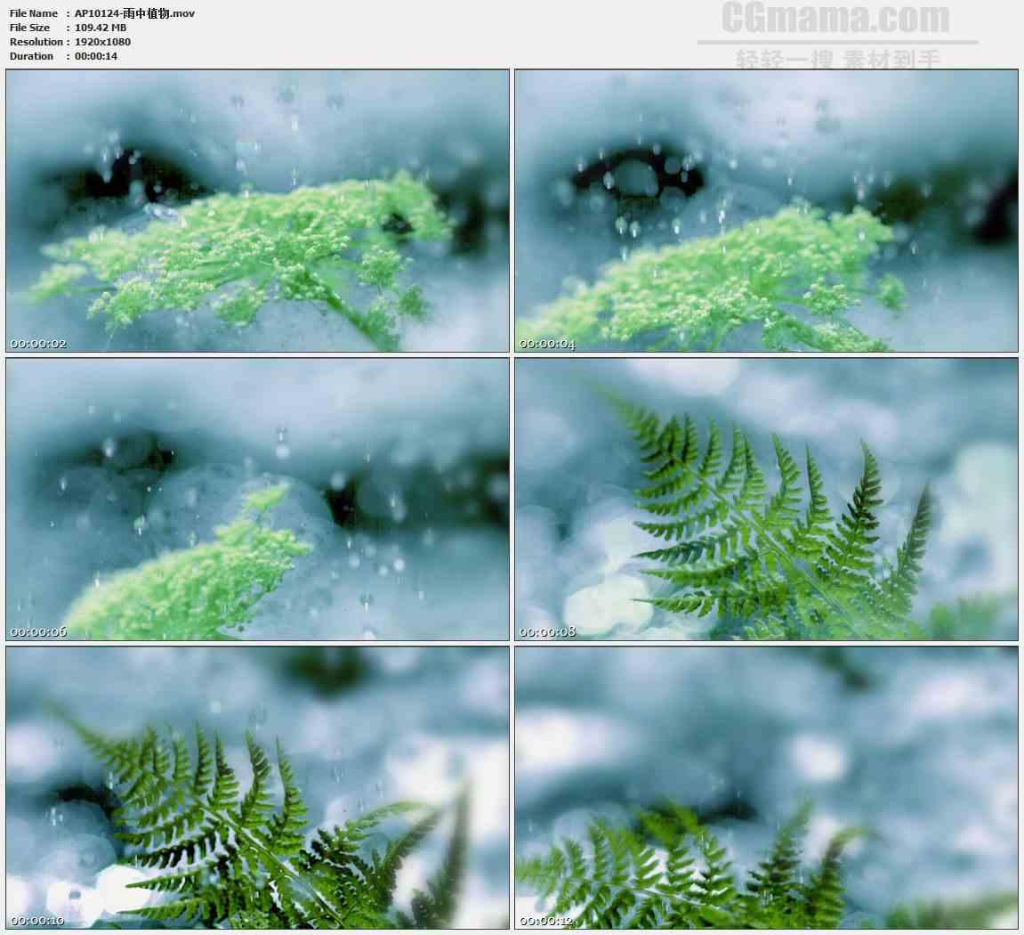 AP10124-雨水拍打绿叶树叶高清实拍视频素材