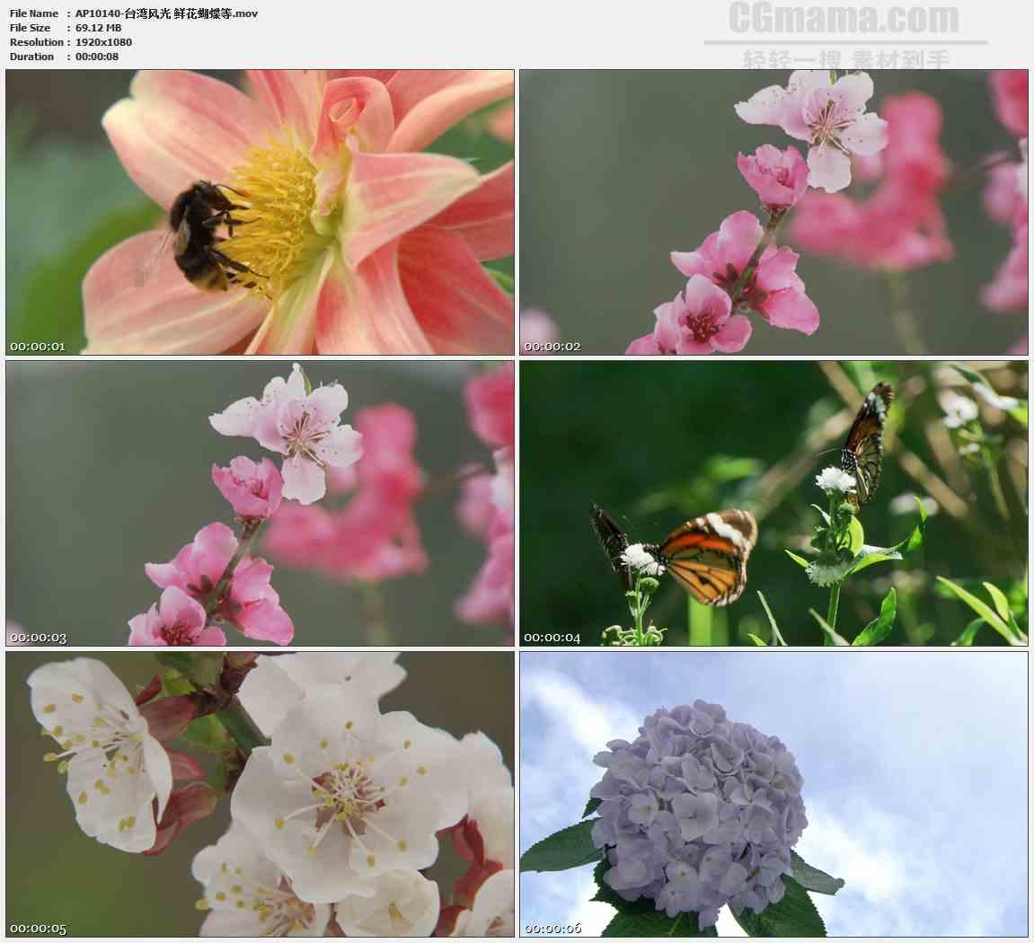 AP10140-花朵蝴蝶蜜蜂采蜜绣球花高清实拍视频素材