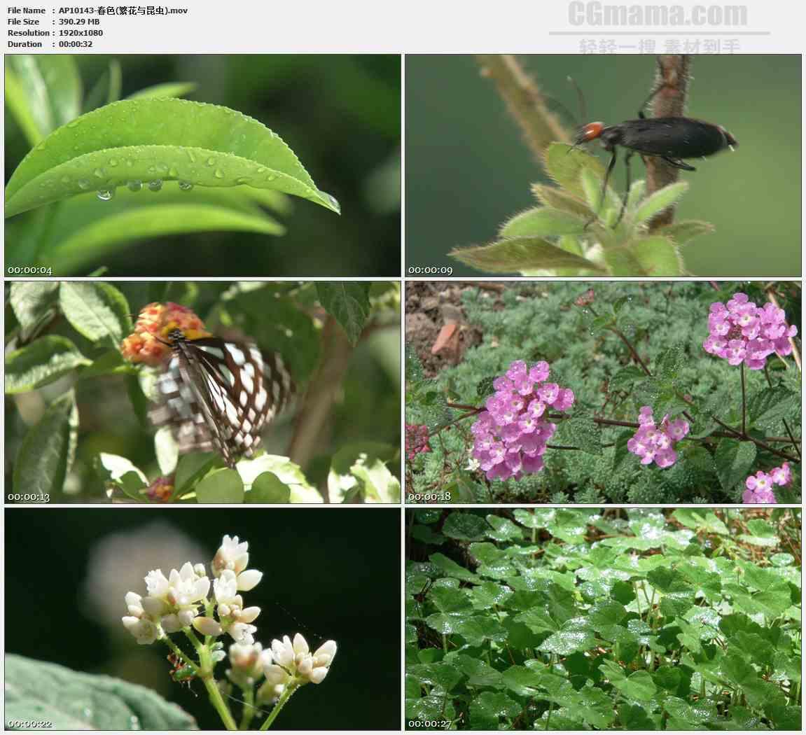 AP10143-蝴蝶昆虫树叶露珠高清实拍视频素材