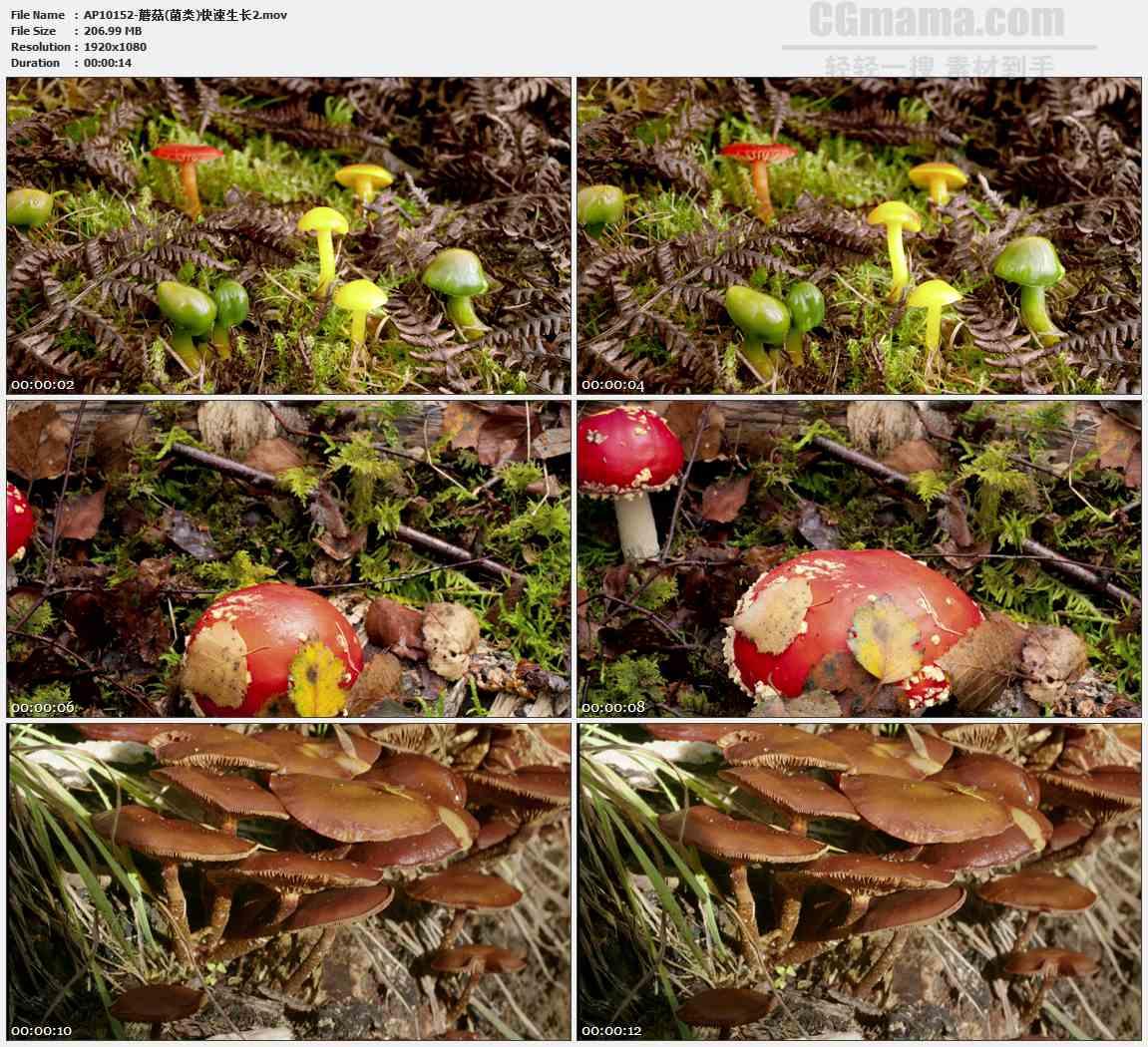 AP10152-彩色蘑菇生长发展高清实拍视频素材