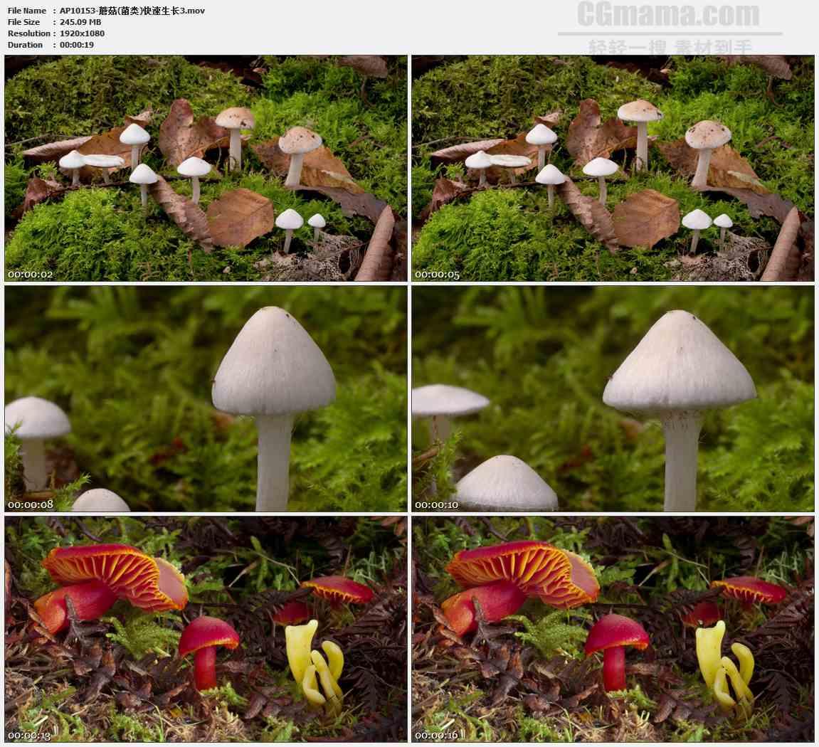 AP10153-白色红色蘑菇生长发展高清实拍视频素材