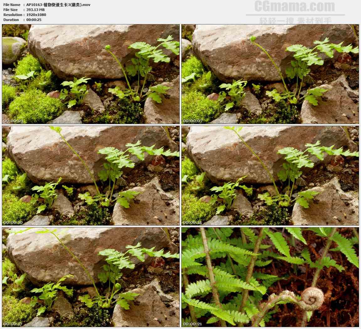 AP10163-苔藓蕨类快速生长发芽高清实拍视频素材