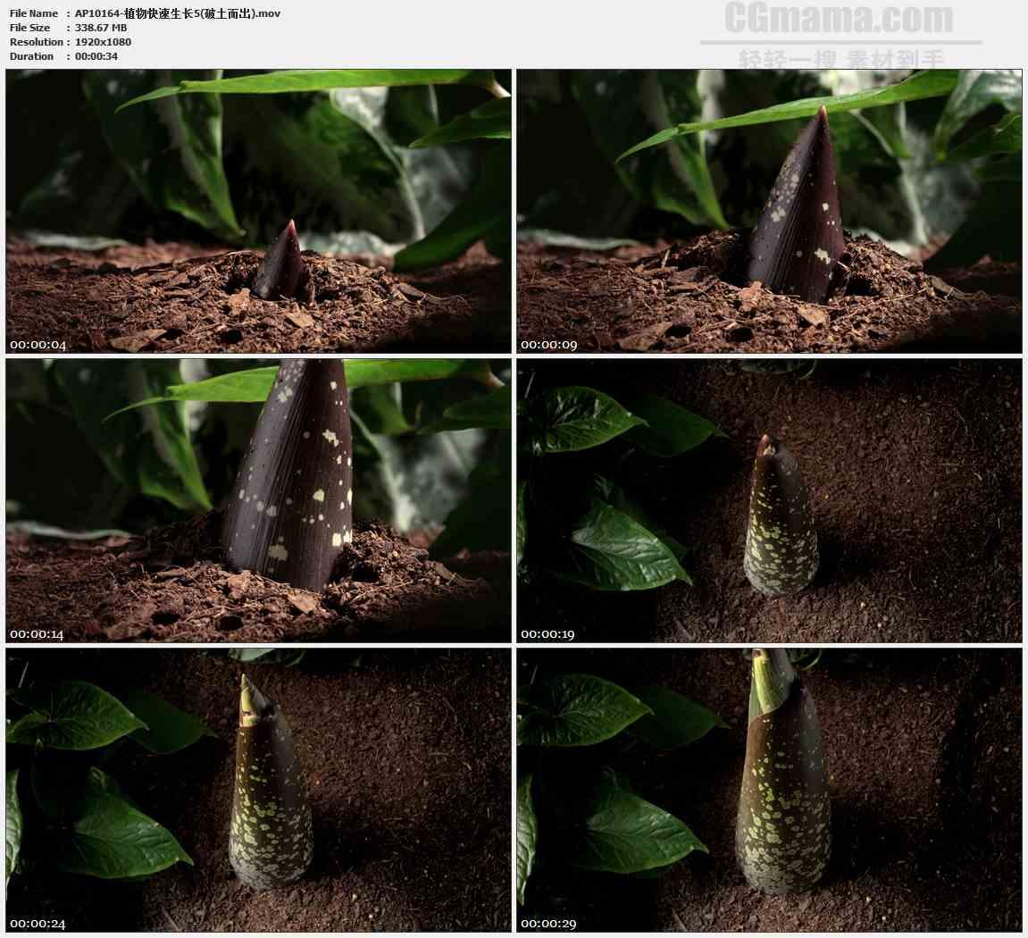 AP10164-竹笋破土而出快速生长高清实拍视频素材