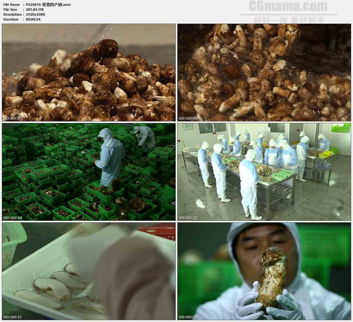 FD10076-野蘑菇洗蘑菇松茸加工产销生产高清实拍视频素材