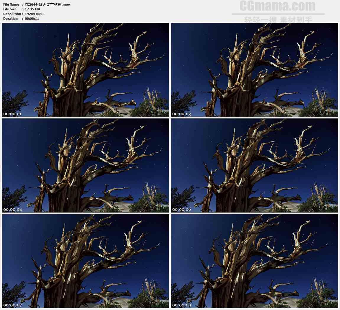 YC2644-蓝天星空枯树高清实拍视频素材