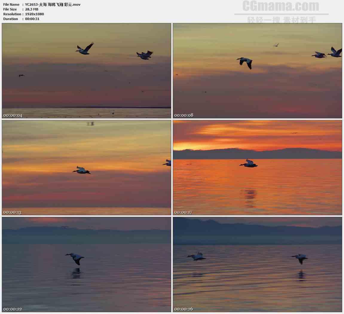 YC2653-大海 海鸥飞翔 彩云高清实拍视频素材