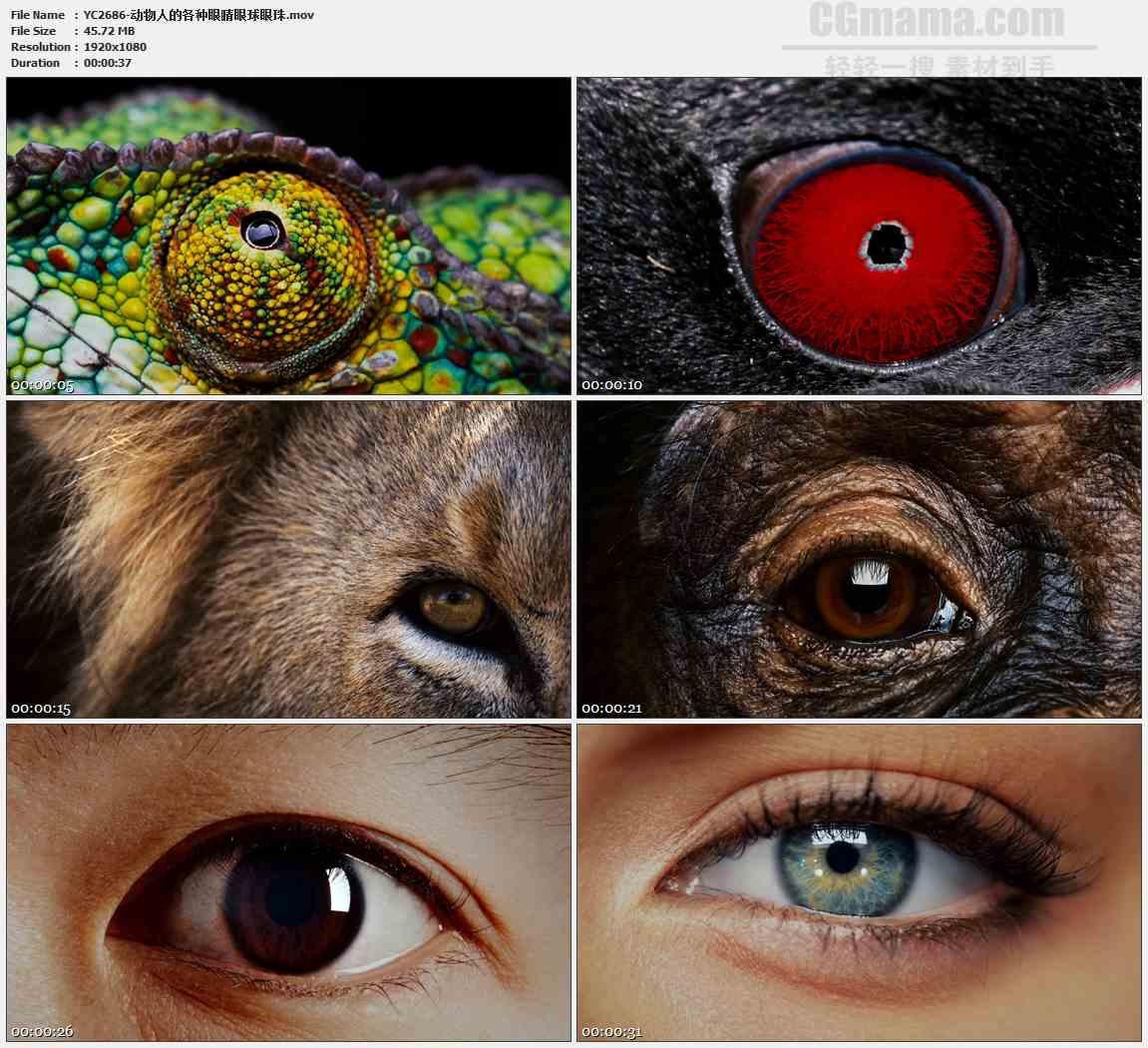 YC2686-动物人的各种眼睛眼球眼珠高清实拍视频素材