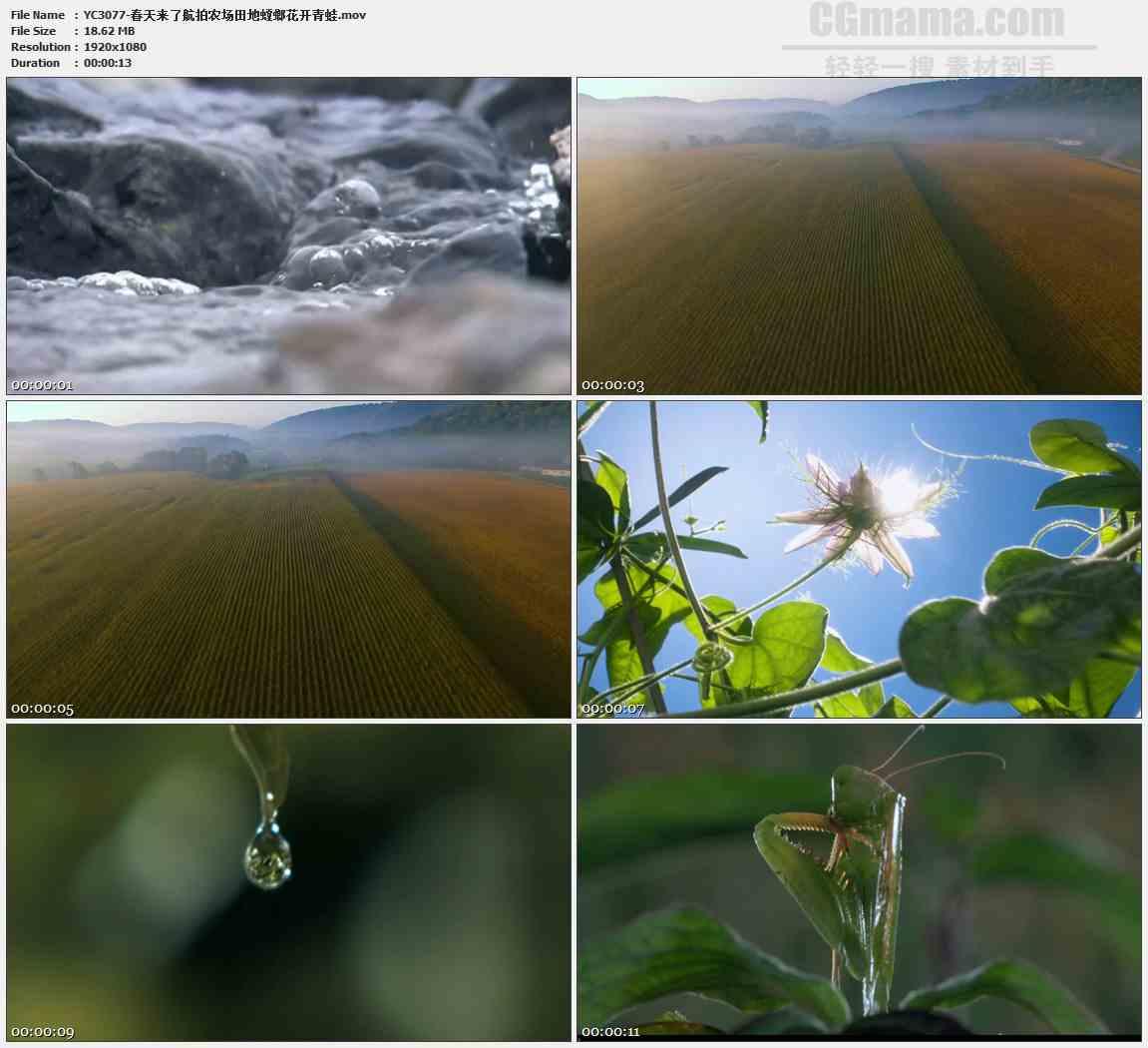 YC3077-春天来了航拍农场田地螳螂花开青蛙高清实拍视频素材