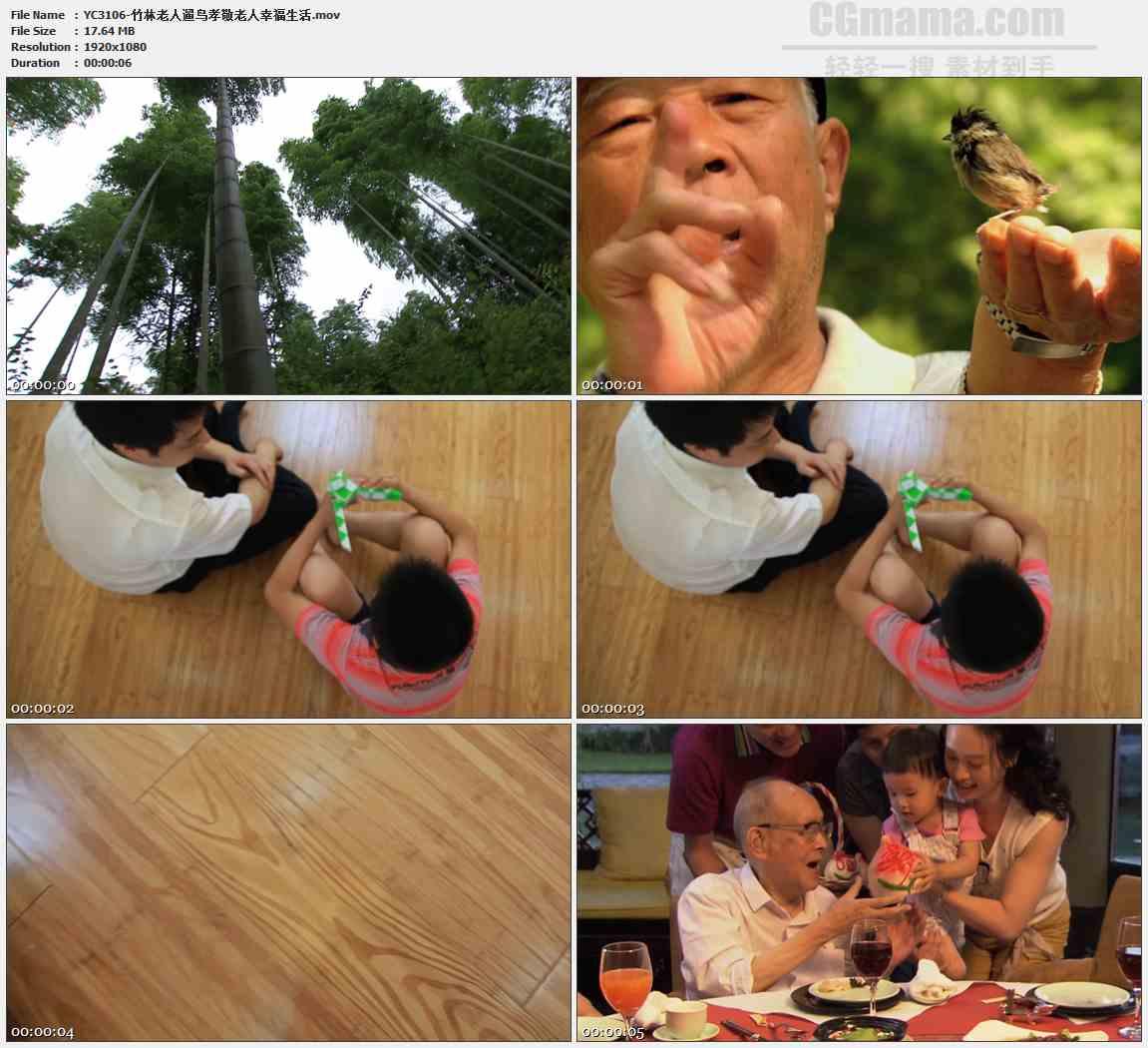 YC3106-竹林老人遛鸟孝敬老人幸福生活高清实拍视频素材