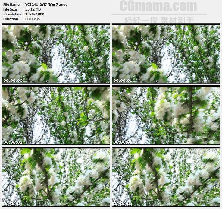 YC3241-海棠花镜头高清实拍视频素材