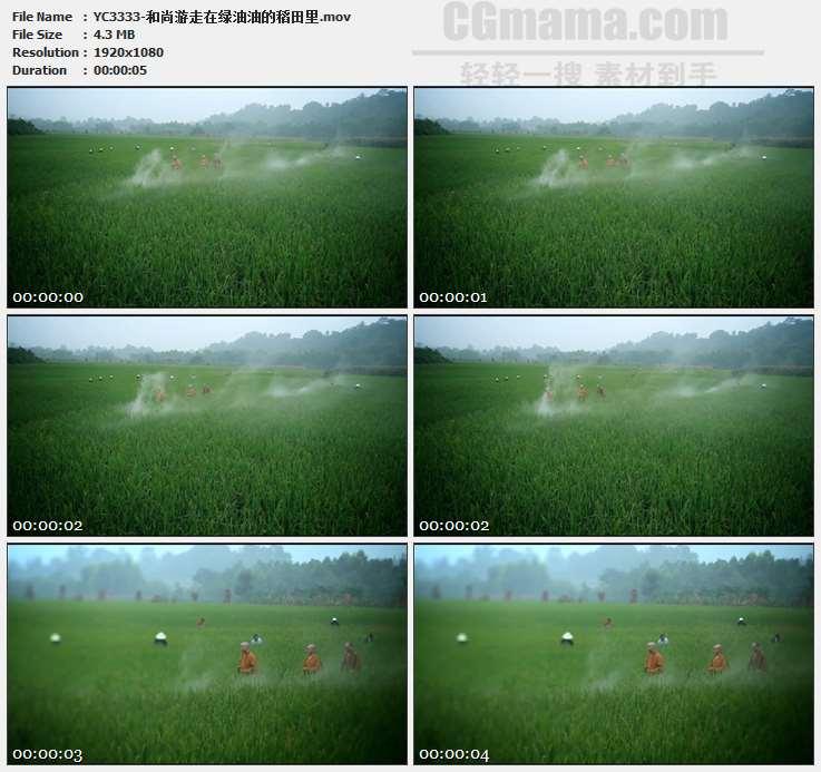 YC3333-和尚游走在绿油油的稻田里高清实拍视频素材