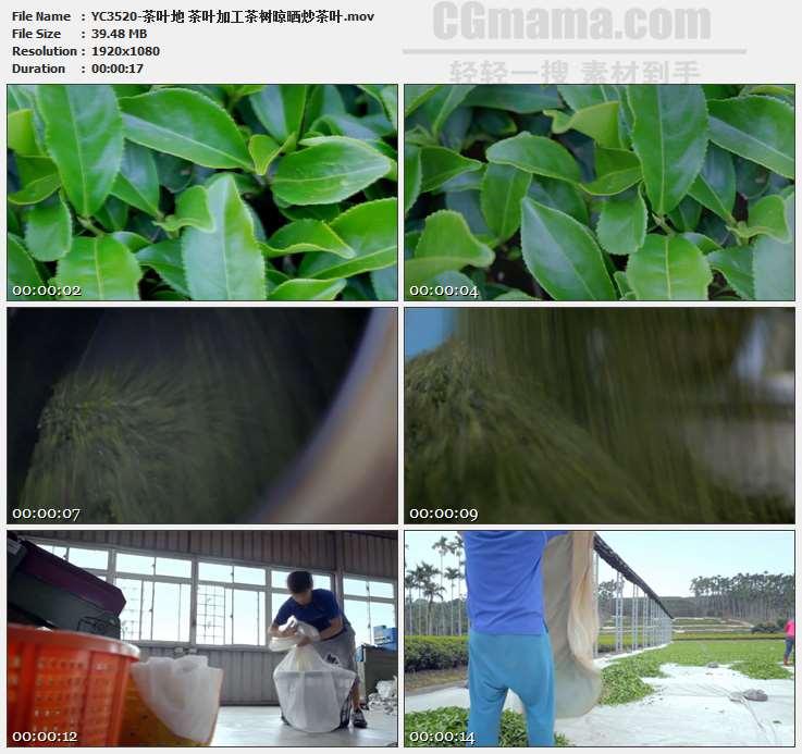 YC3520-茶叶地 茶叶加工茶树晾晒炒茶叶高清实拍视频素材