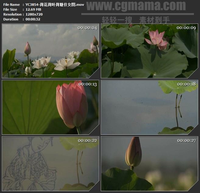 YC3854-荷花荷叶荷塘仕女图高清实拍视频素材