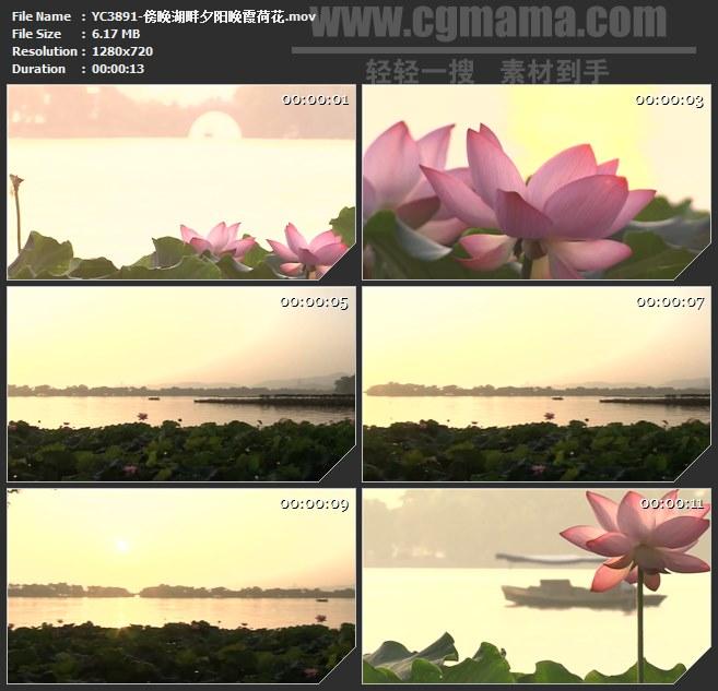 YC3891-傍晚湖畔西湖夕阳晚霞荷花高清实拍视频素材