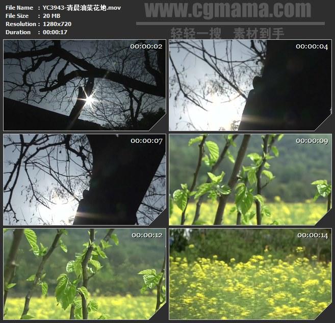 YC3943-清晨油菜花地高清实拍视频素材