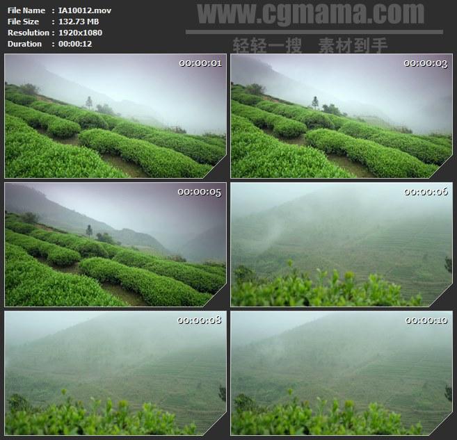 IA10012-高山天然有机茶叶茶园云雾高清实拍视频素材