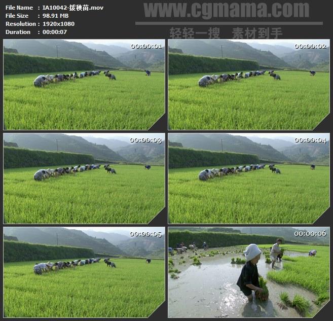 IA10042-拨秧苗农作高清实拍视频素材
