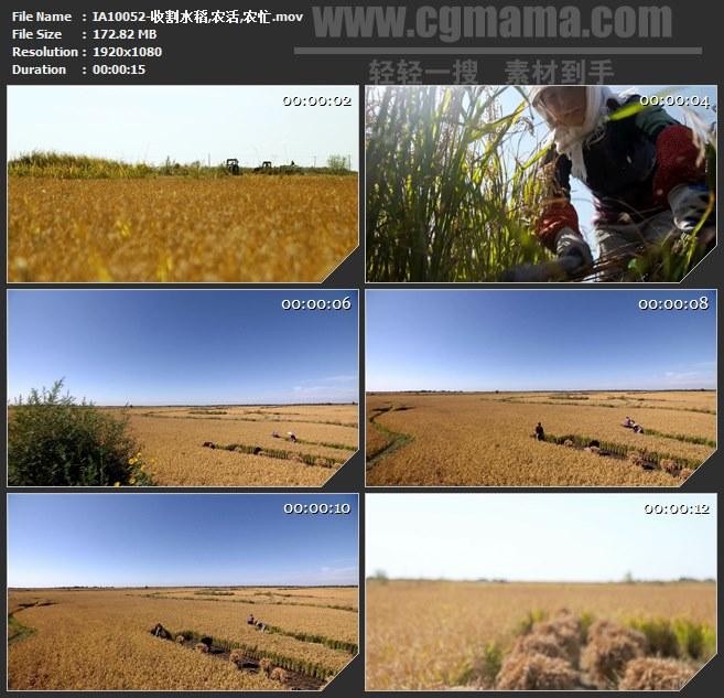 IA10052-收割水稻麦田农活农忙高清实拍视频素材