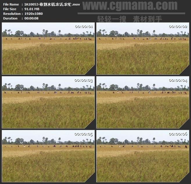 IA10053-收割水稻农活农忙高清实拍视频素材