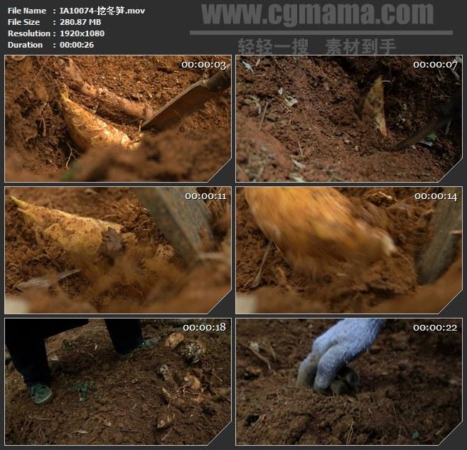 IA10074-挖冬笋刨竹笋高清实拍视频素材高清实拍视频素材