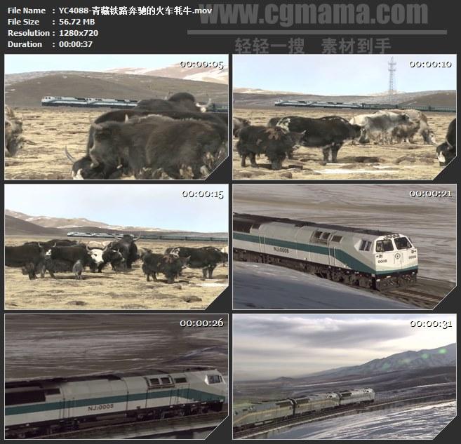 YC4088-青藏铁路奔驰的火车牦牛高清实拍视频素材