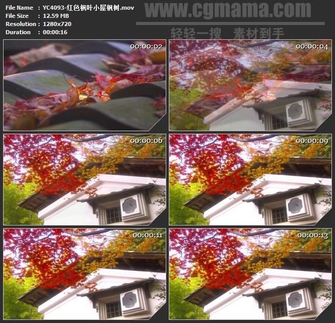 YC4093-红色枫叶小屋枫树高清实拍视频素材