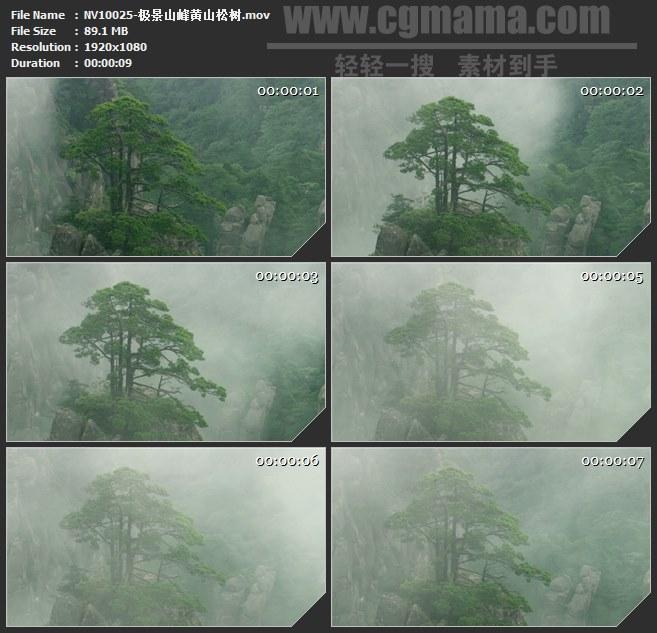 NV10025-山峰黄山松树自然美景高清实拍视频素材