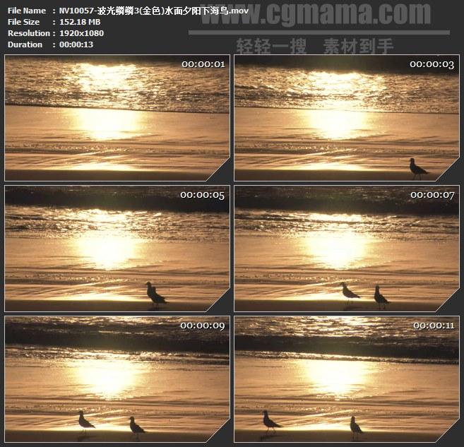 NV10057-波光鳞鳞金色水面夕阳下海鸟高清实拍视频素材