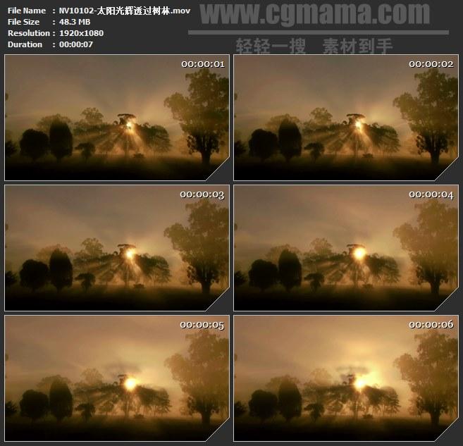 NV10102-太阳光辉透过树林自然美景高清实拍视频素材