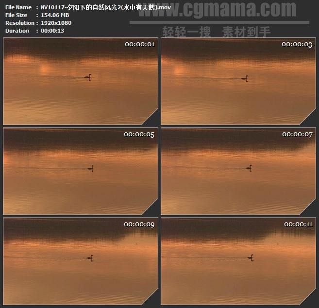 NV10117-夕阳自然风光水中有天鹅高清实拍视频素材