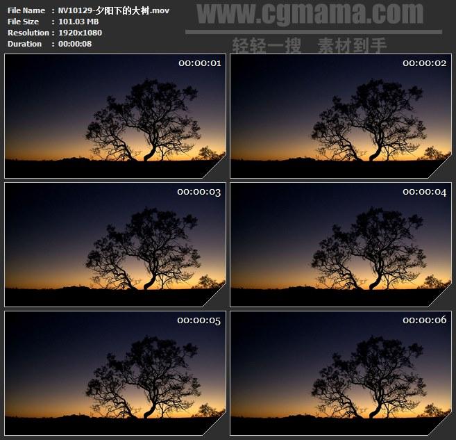 NV10129-夕阳大树树影傍晚美丽自然景观高清实拍视频素材