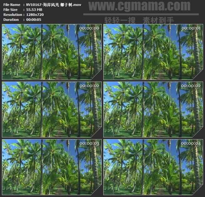 NV10167-椰子树椰林风光美景高清实拍视频素材