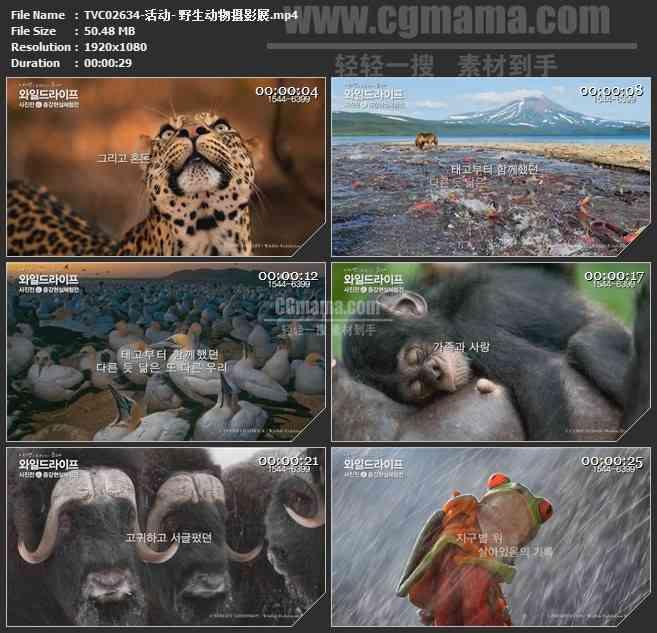 TVC02634-活动- 野生动物摄影展