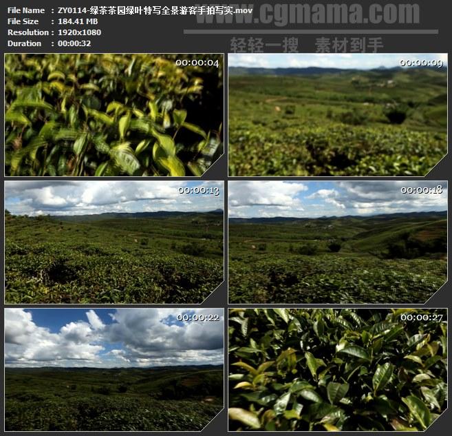 ZY0114-绿茶茶园绿叶特写全景游客手拍写实 高清实拍视频素材