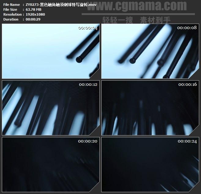 ZY0273-黑色触角触须刺球特写旋转 高清实拍视频素材