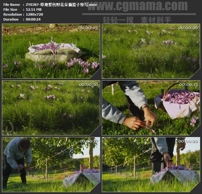 ZY0387-草地紫色野花采摘篮子特写 高清实拍视频素材
