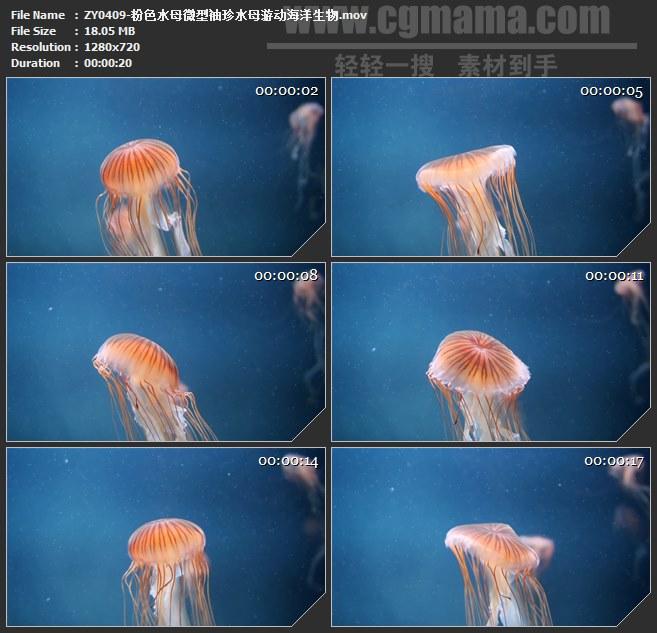 ZY0409-粉色水母微型袖珍水母游动海洋生物 高清实拍视频素材