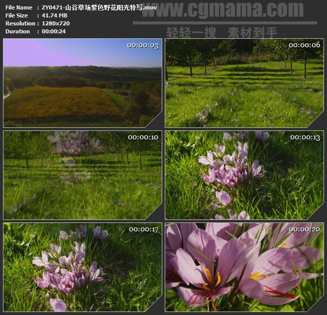 ZY0471-山谷草场紫色野花阳光特写 高清实拍视频素材