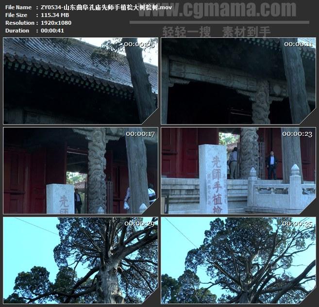 ZY0534-山东曲阜孔庙先师手植桧大树桧树 高清实拍视频素材