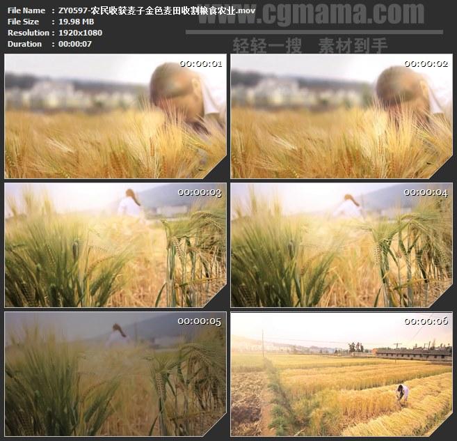 ZY0597-农民收获麦子金色麦田收割粮食农业 高清实拍视频素材