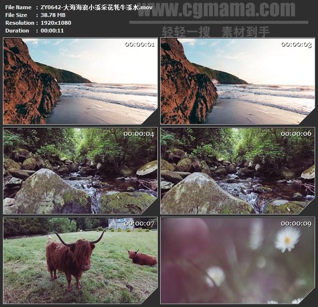 ZY0642-大海海浪小溪采花牦牛溪水 高清实拍视频素材